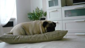 Jeggi odpočinek